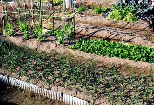 1-19.01.13 菜園.jpg