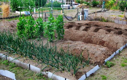 1-19.02.27 菜園-1.jpg