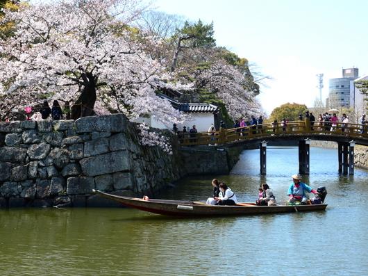 1-19.04.04 和歌山城公園の桜-2.jpg