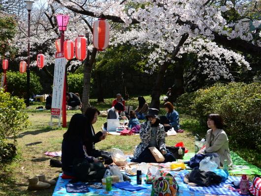 1-19.04.04 和歌山城公園の桜-7.jpg