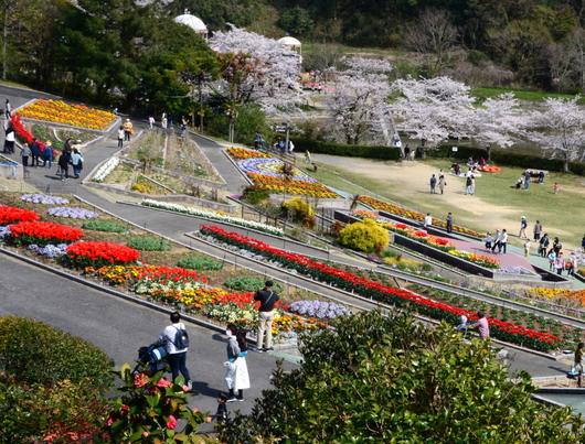 1-19.04.10 緑化センタ-花壇-1.jpg