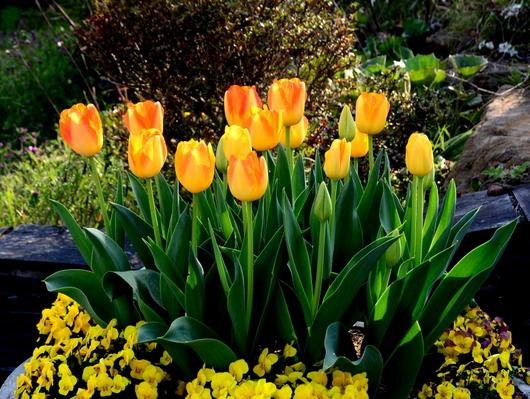 1-19.04.10 緑化センタ-花壇-3.jpg