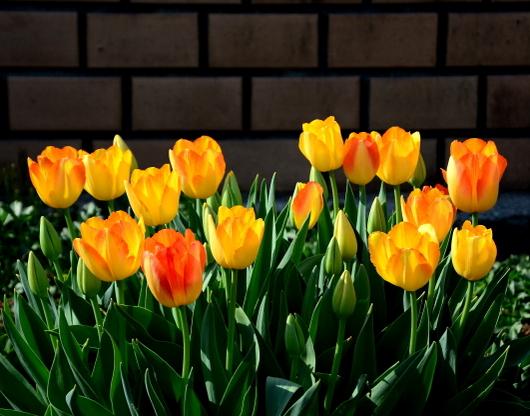 1-19.04.10 緑化センタ-花壇-5.jpg