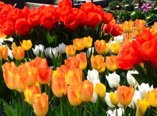 1-19.04.10 緑化センタ-花壇-6.jpg