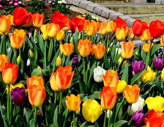 1-19.04.10 緑化センタ-花壇-8.jpg