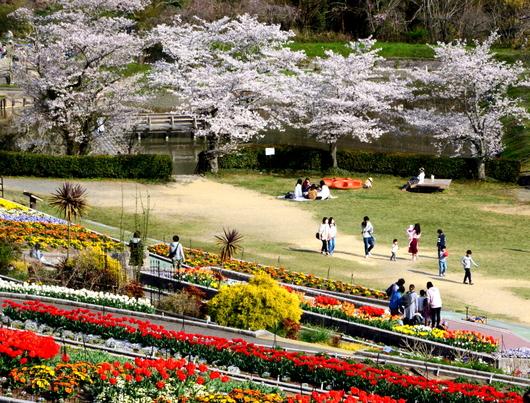 1-19.04.10 緑化センタ-花壇-9.jpg