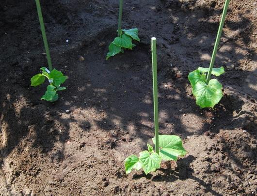 1-19.04.19 菜園-4.jpg