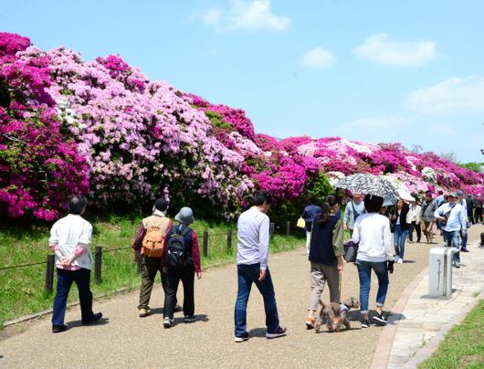 1-19.05.04 浅香山緑道のつつじ-1.jpg