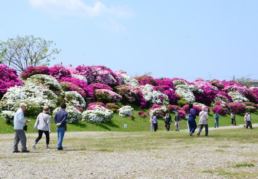1-19.05.04 浅香山緑道のつつじ-6.jpg