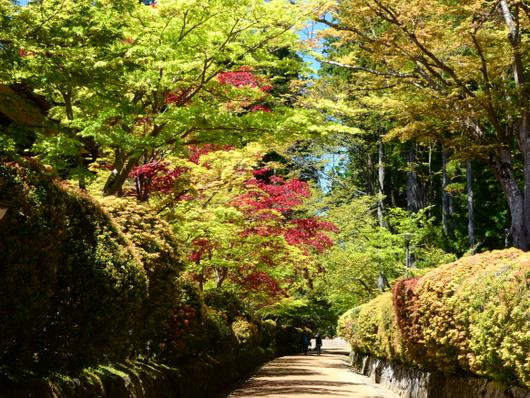 1-19.05.13 新緑の高野山-3.jpg
