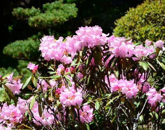 1-19.05.13 新緑の高野山-9.jpg