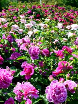 1-19.05.19 泉南農業公園-7.jpg
