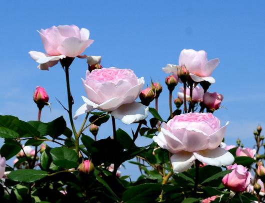 1-19.05.19 泉南農業公園-9.jpg