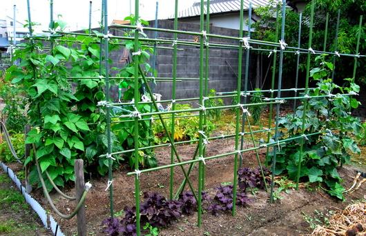 1-19.06.09 菜園-1.jpg