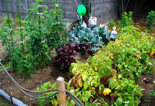 1-19.06.09 菜園-2.jpg