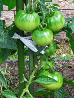 1-19.06.09 菜園-3.jpg