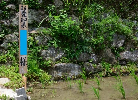 1-19.06.24 丸山千枚田-7.jpg