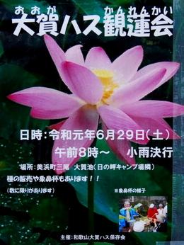 1-19.07.06 三尾の大賀蓮-8.jpg